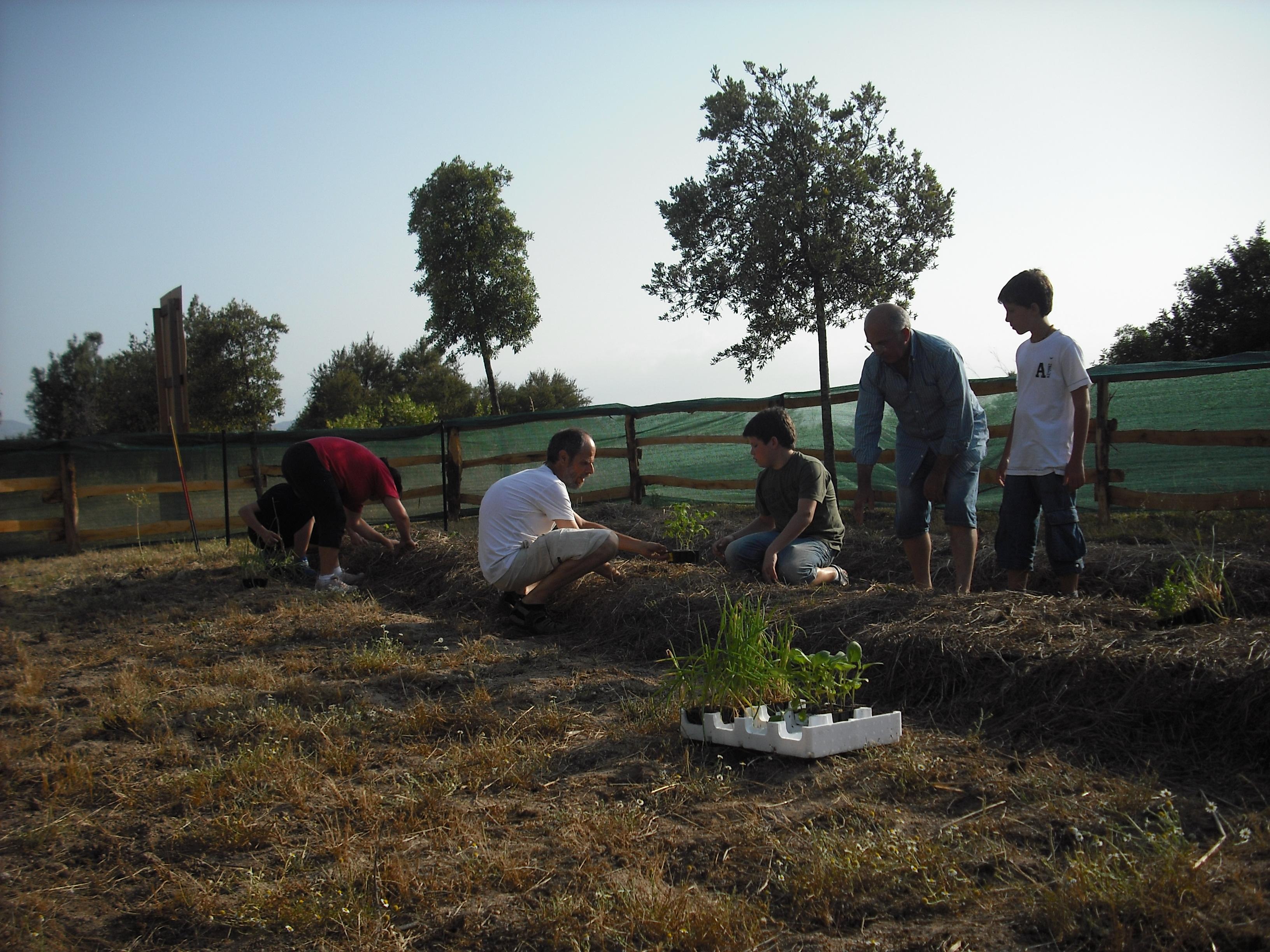 Infea olbia tempio orto sinergico irrigazione a goccia for Irrigazione a goccia per pomodori